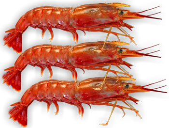 Red Prawn Cutlets 16 20 Argentinian Per Packet Onezoo Com Au